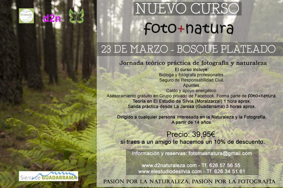 Sierra de Guadarrama, curso de fotografía y naturaleza, foto+natura, El Estudio de Silvia, Guadarrama, Bosque plateado, La Jarosa