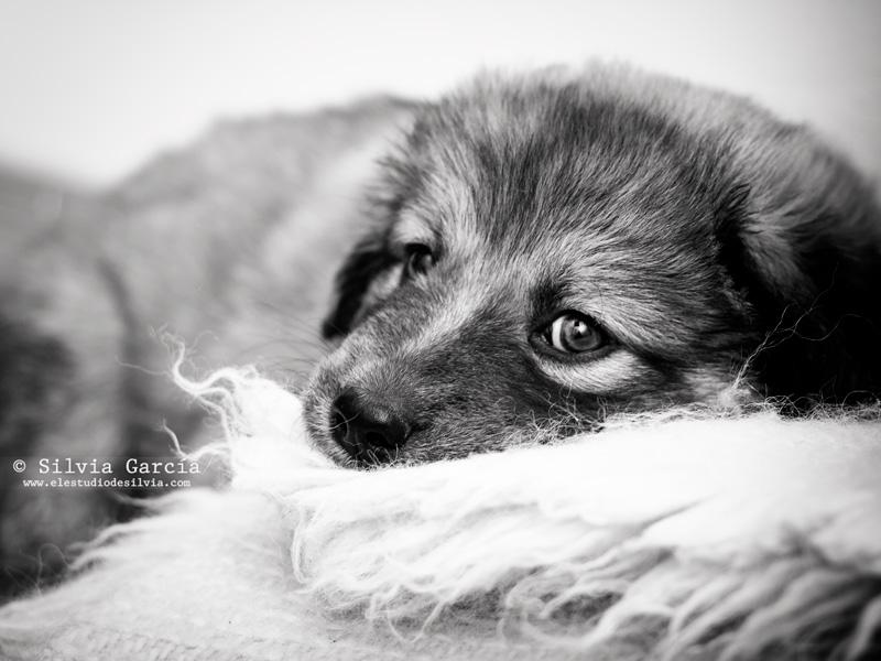 sesion de fotos con mascotas, fotos con perros, recuerdos con mascota, fotografía de mascotas, fotografía de perros, retrato con perro